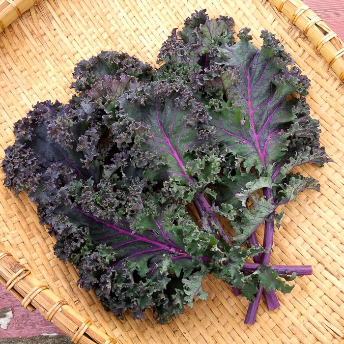 Baltic-Red-Kale
