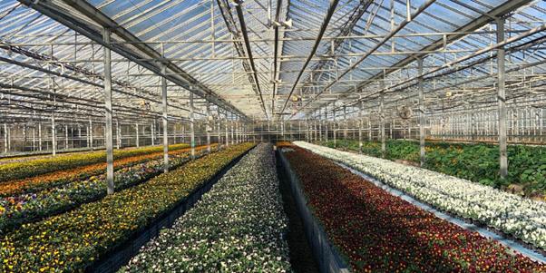Westlands green house