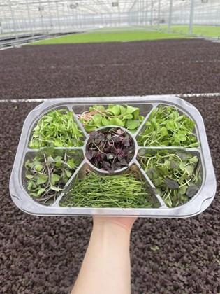 Westlands mixed tray