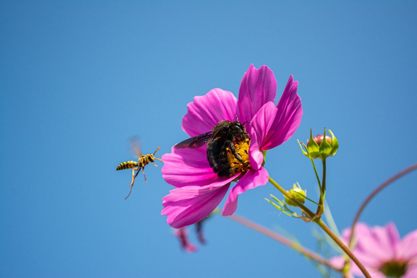 insects on a flower